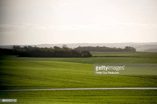 filed near aarhus, central jutland, denmark - 平地 ストックフォトと画像