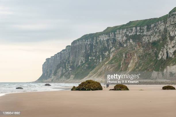 filey bay and bempton cliffs, north yorkshire, england - low tide stock pictures, royalty-free photos & images