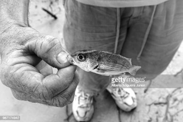 filho de peixe ... - filho stock-fotos und bilder