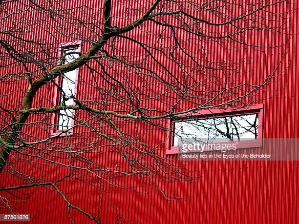 Filigree of tree branches against red building