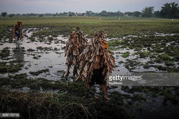 Filipino devotees covered in mud and dried leaves walk in a field in a pagan religious tradition to mark the 'Taong Putik' festival and the Feast of...