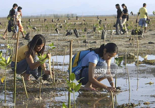 """Filipino volunteers plant mangrove saplings during the annual Valentine's Day mass planting, dubbed a """"love affair with nature"""", along the Puerto..."""
