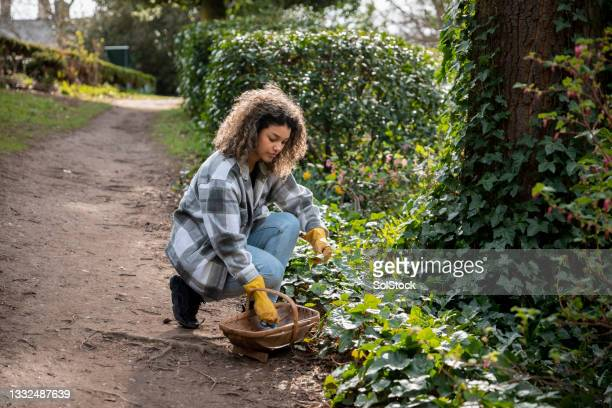 filling her basket with wild plants - named wilderness area stock pictures, royalty-free photos & images