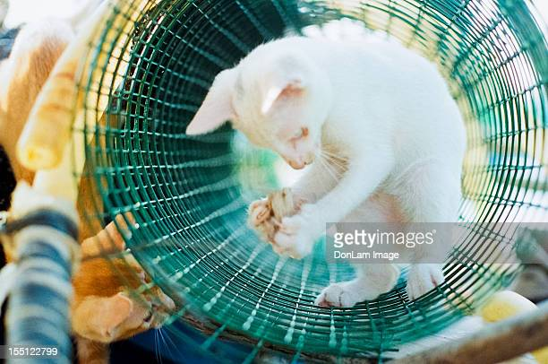 cat film - zhanjiang stock photos and pictures