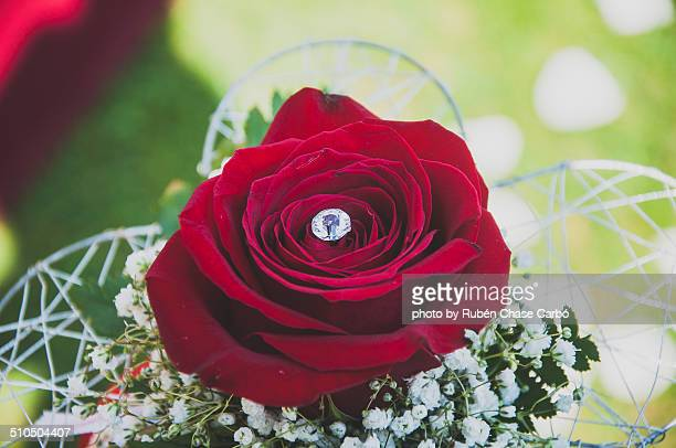 filmic rose - single rose stock photos and pictures
