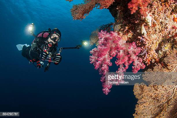 Filming diver and soft corals