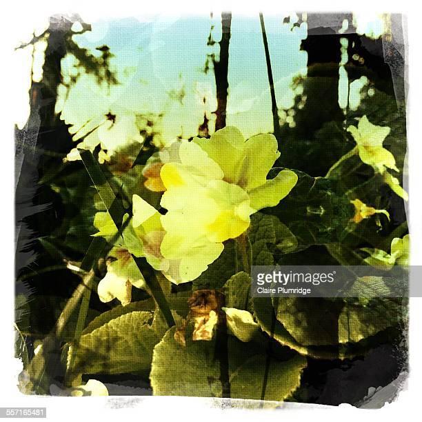 filters - ウェスト・バークシャー ストックフォトと画像