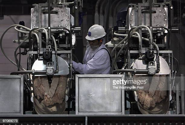 MEAT03a DATE: May 17, 2008 CREDIT: Carol Guzy/ The Washington Post South Sioux City, Nebraska Enrique Robles with BPI Technology Inc. Which uses...