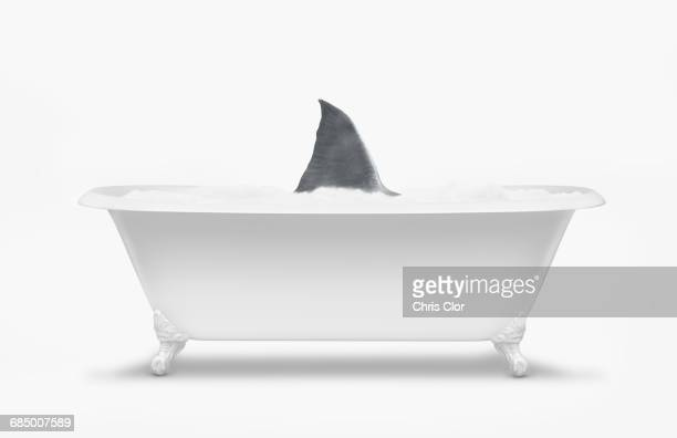 Fin of shark swimming in bathtub