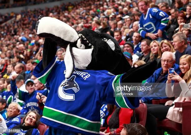 Fin the Vancouver Canucks mascot bites a penguin during the NHL game against the Pittsburgh Penguins at Rogers Arena January 7 2014 in Vancouver...