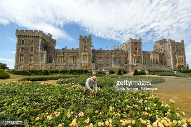 Final preparations are made ahead of Windsor Castle's East Terrace Garden opening to the public for the first time in decades from Saturday.