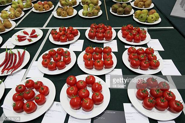 Finalists in the 'Medium Tomatoes' category are displayed at the Royal Horticultural Society's London Autumn Harvest Show on October 6 2010 in London...