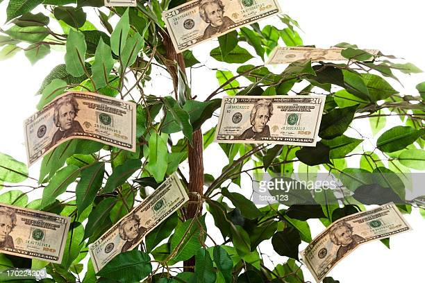 finances:  money growing on a tree. - money tree stock photos and pictures