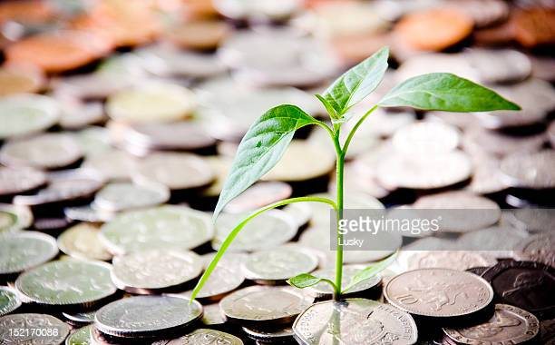 financial growth - money tree stock photos and pictures