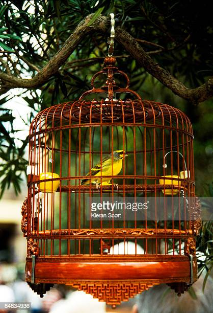 Finch in bamboo cage.