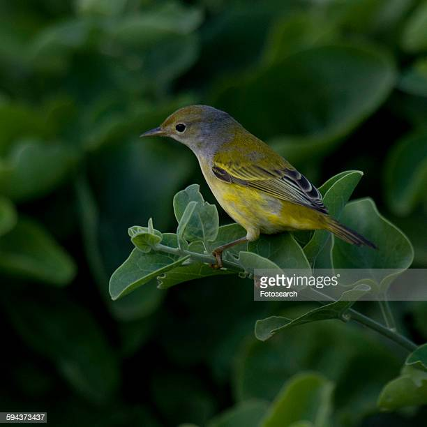 Finch perching on a branch