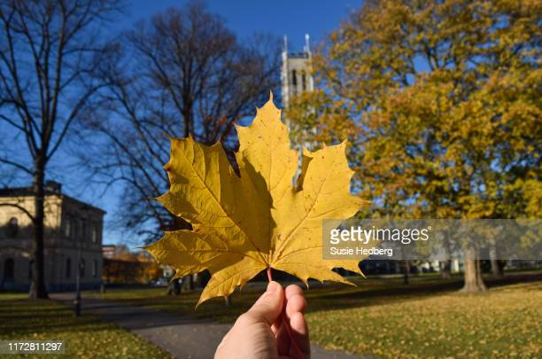 hand holding up yellow maple leaf