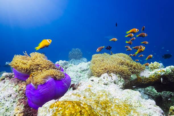Finding Nemo Wall Art