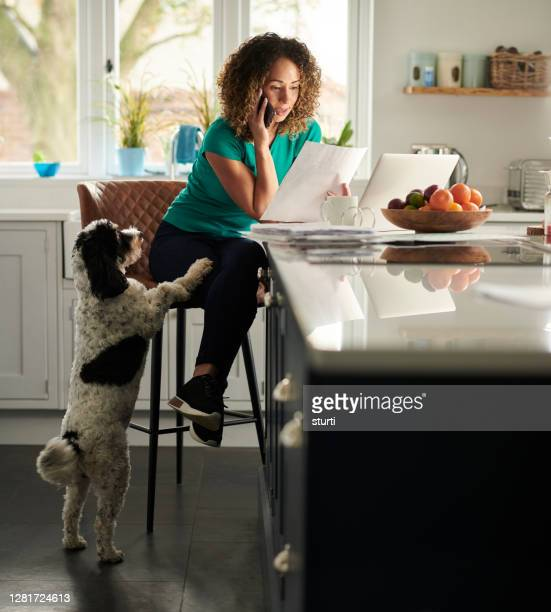 finding pet insurance - home office stock pictures, royalty-free photos & images