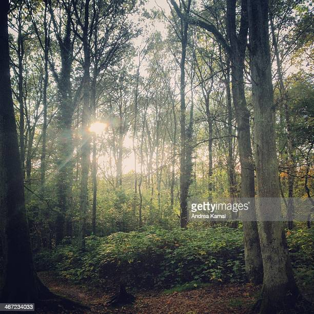 finding tranquility - wald stock pictures, royalty-free photos & images