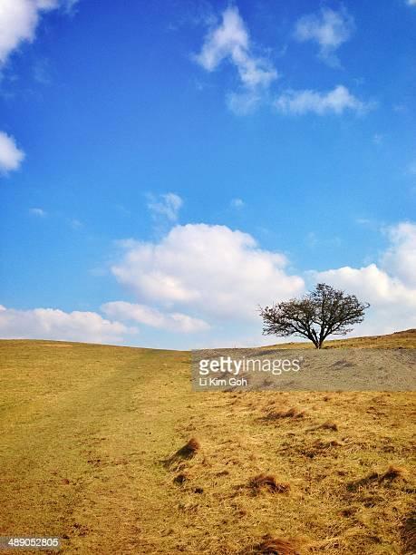 finding tranquility - アフィントン ストックフォトと画像