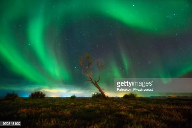 fine art of aurora nothern light over alone tree in night scene - provincia di songkhla foto e immagini stock
