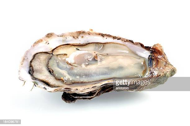 fine de claire oyster isolated on white - oyster shell stock photos and pictures