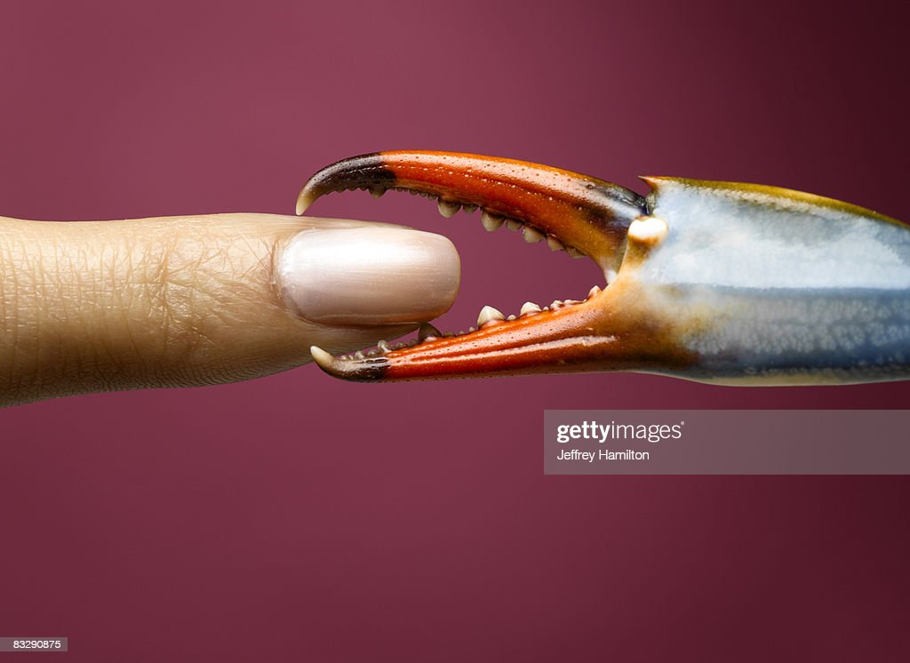 Finger being pinched by blue crab claw : Stock Photo