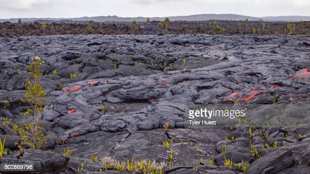 finger of lava approaches bush - pele goddess stock pictures, royalty-free photos & images