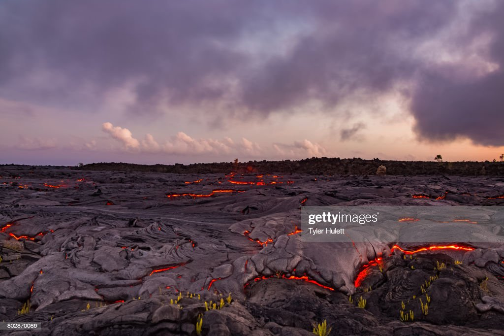 Finger of lava approaches plants : Stock Photo