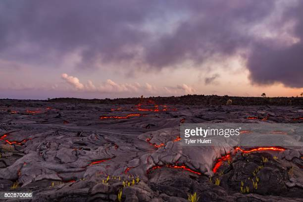 finger of lava approaches plants - lava stock pictures, royalty-free photos & images