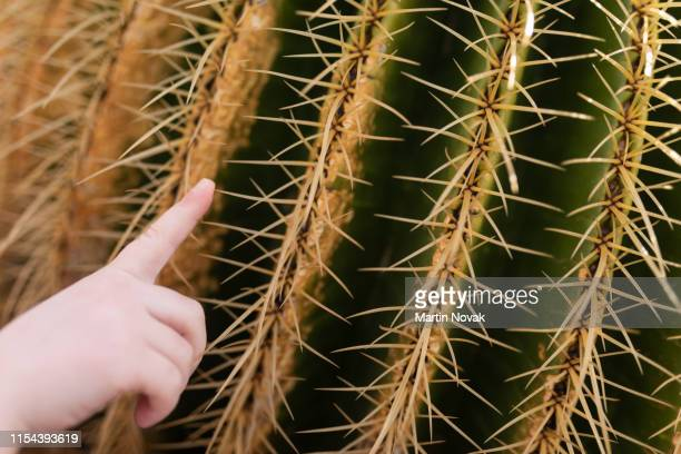 finger pricking against sharp cacti spines - thorn stock pictures, royalty-free photos & images