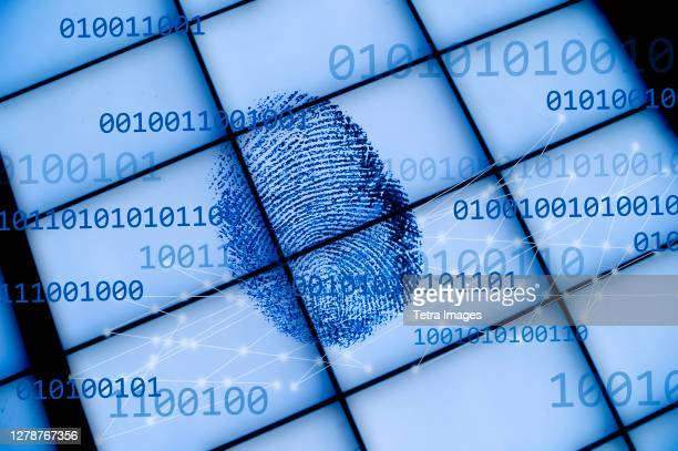 fingerprint on grid with binary code - forensic science stock pictures, royalty-free photos & images