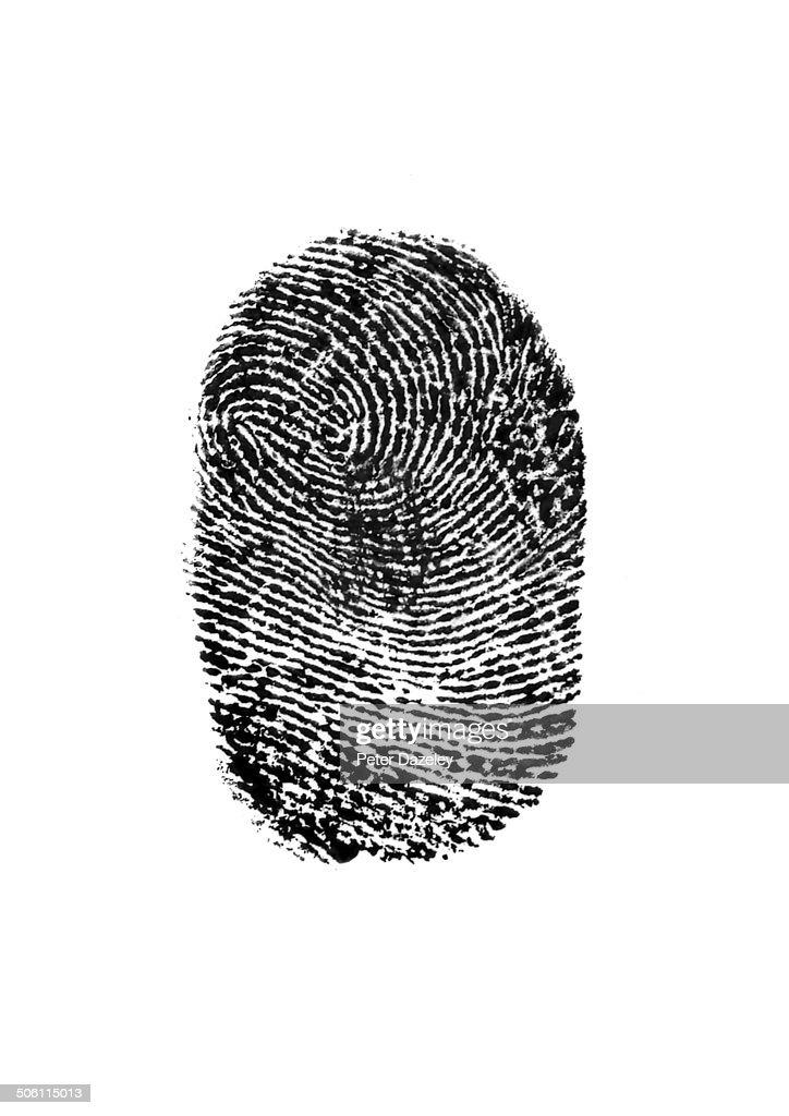 Fingerprint on white background : Stock Photo