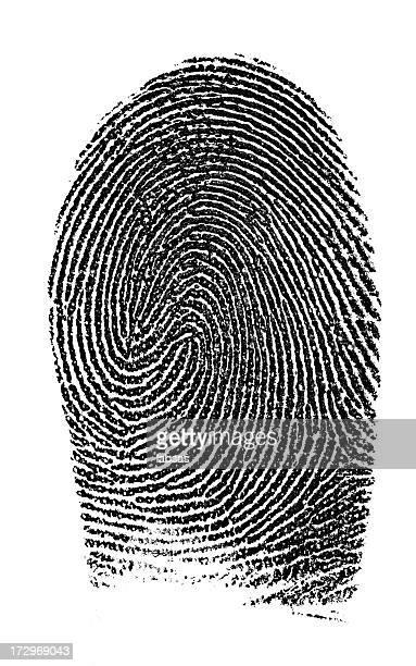 Fingerprint photographed on white background.