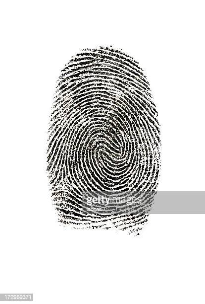 Fingerprint photographed on white background.