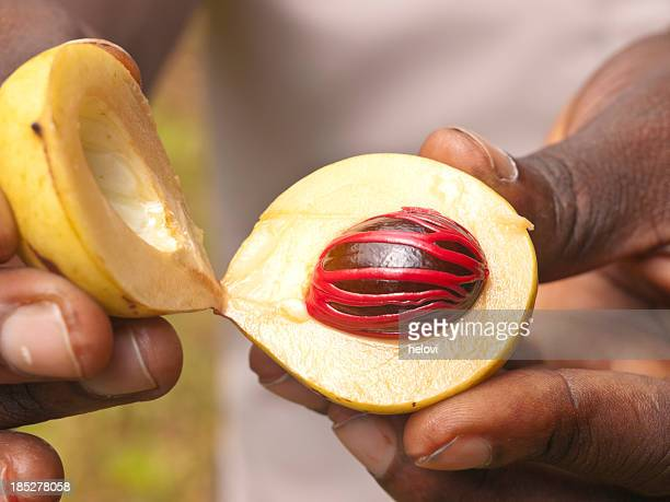Fingers each hold half of an open Nutmeg with seed showing