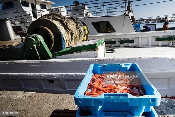 Pesca de camarones terminado