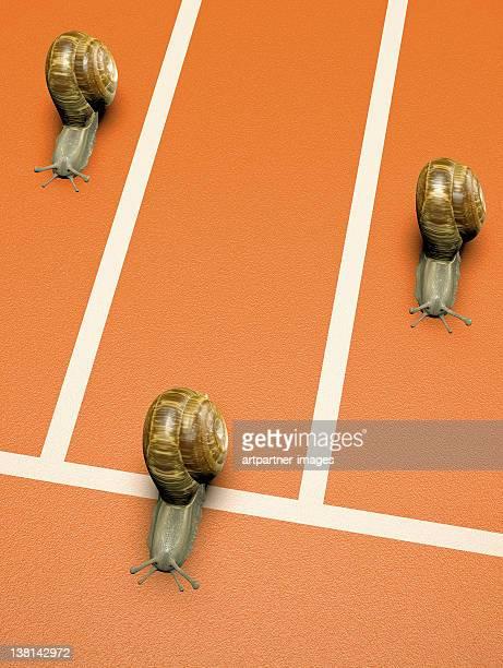 finishing line with running snails - animal win fotografías e imágenes de stock