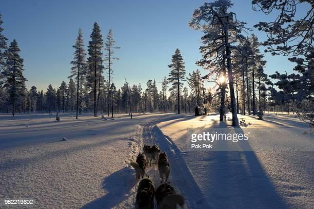 Finland Husky