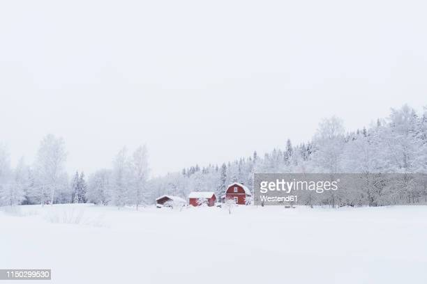 finland, kuopio, farmhouse in winter landscape - 深い雪 ストックフォトと画像