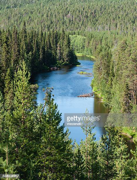 Finland, Lapland, Kuusamo, Oulanka National Park, Oulankajoki river with pine forest
