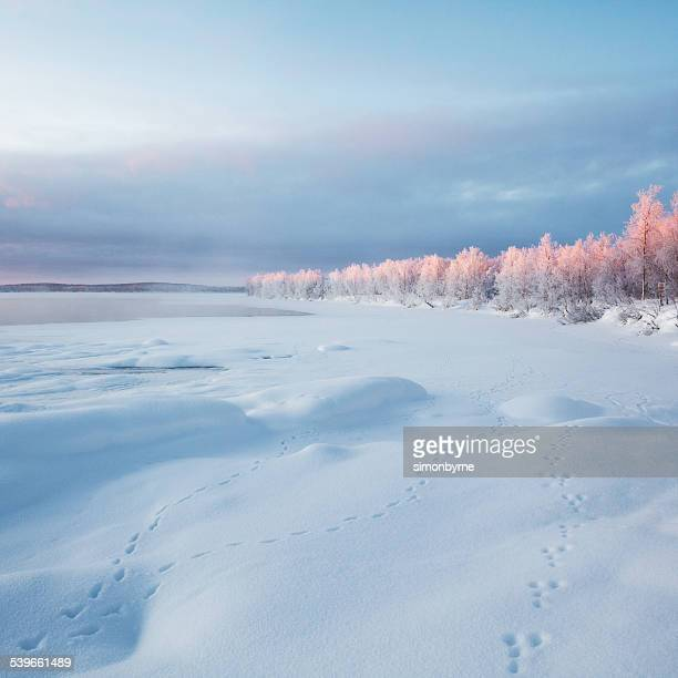 Finland, Sunrise and animal footprints in the taiga forest