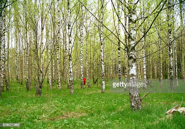 finnish forrest with intruder - turku finland stock photos and pictures