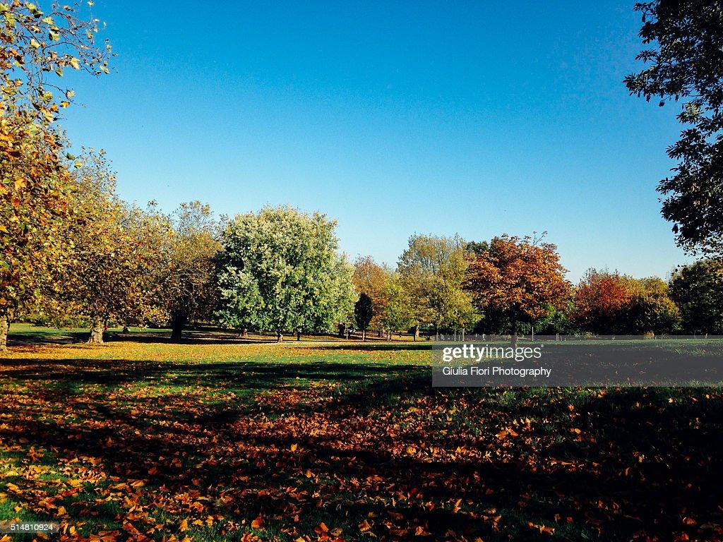 Finsbury Park in autumn, London : Stock Photo