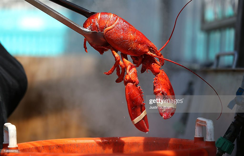 Mild Winter In Northeast Drives Lobster Prices To Record Lows : News Photo