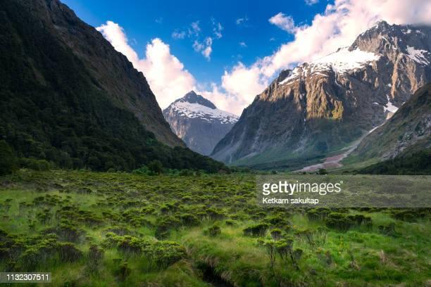 fiordland national park near way to milford sound , southland , new zealand - alpes do sul da nova zelândia - fotografias e filmes do acervo