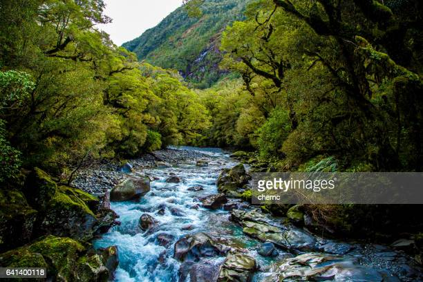 fiordland notional park - southland new zealand stock pictures, royalty-free photos & images