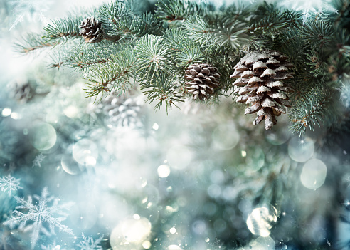 Fir Branch With Pine Cone And Snow Flakes 489761944
