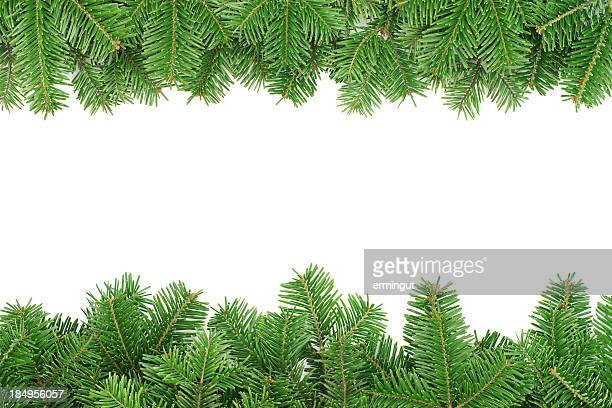 Fir tree border isolated on white background